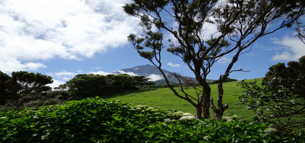 vista verde azores_Azoren_Pico_Berg