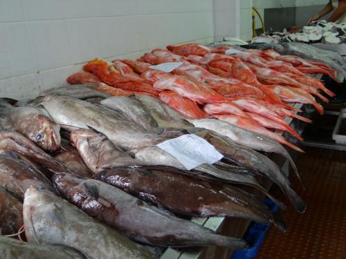Terceira_Fisch