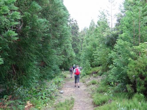 Terceira_Gruppe im Wald