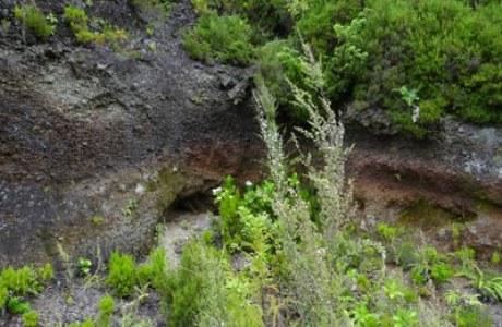 Terceira_Landschaftsblick
