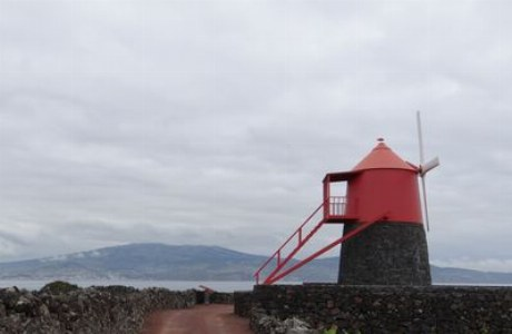 Pico_Weinfelder mit Windmühle