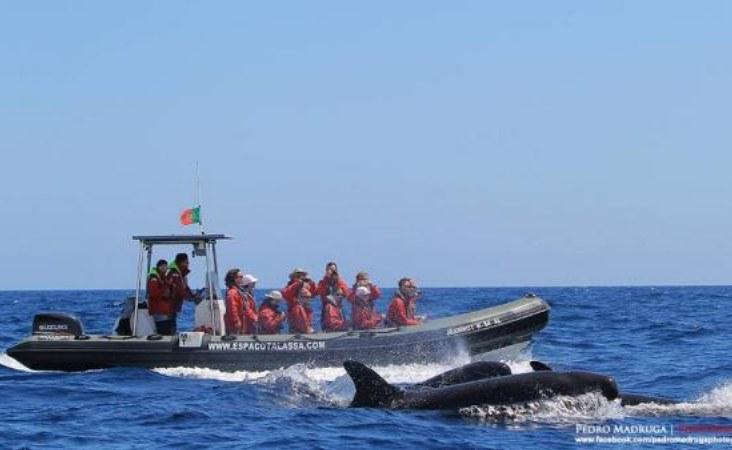 Espaco Talassa_Boot und Tier 1
