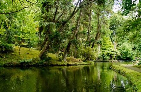 Azoren_Terra Nostra Park_Sao Miguel