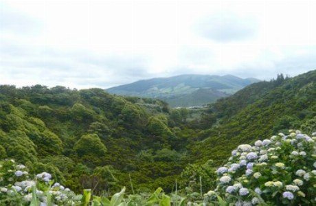Faial_Hortensien und Natur